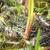 béka · növény · levelibéka · ki · közelkép · fókusz - stock fotó © manfredxy