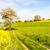 フィールド · ツリー · 花 · 雲 · 風景 - ストックフォト © manfredxy