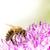 lila · óriás · hagyma · virág - stock fotó © manfredxy