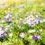 voorjaar · krokus · bloemen · winter · vroeg - stockfoto © manfredxy