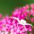 white crab spider stock photo © manfredxy