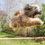 hond · vliegen · Engels · bulldog · bewolkt · blauwe · hemel - stockfoto © manfredxy