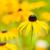 virág · virágok · kert · napos · idő · természet · egészség - stock fotó © manfredxy