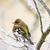 kuş · oturma · kar · doğa · bahçe · kış - stok fotoğraf © manfredxy