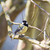 teta · pássaro · sessão - foto stock © manfredxy