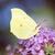 kelebek · görüntü · makro · çiçekler · doğa · hayvan - stok fotoğraf © manfredxy