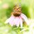 wenig · Schmetterling · farbenreich · orange · Tier - stock foto © manfredxy
