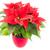 foglie · fiore · primo · piano · top · rosso · albero - foto d'archivio © manfredxy