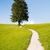 wandelen · pad · eenzaam · boom · alpen · gras - stockfoto © manfredxy