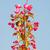 printemps · brindille · rose · fleurs · faible · oeufs - photo stock © manfredxy
