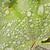 зеленый · лист · дерево · природы · лист - Сток-фото © manfredxy