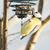 azul · teta · pássaro · alimentação · enforcamento · árvore - foto stock © manfredxy