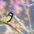 teta · verde · água · pássaro · cor - foto stock © manfredxy