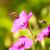 battenti · volare · animale · ali - foto d'archivio © manfredxy