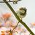 casa · pardal · pássaro · animal · masculino · ramo - foto stock © manfredxy