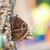 trópusi · pillangó · közelkép · lövés - stock fotó © manfredxy