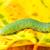 verde · lagarta · borboleta · macro - foto stock © manfredxy