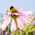 flor · saúde · ervas · bem-estar · droga · flor - foto stock © manfredxy