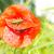 緑 · グラスホッパー · 白 · ジャンプ · 脚 · 昆虫 - ストックフォト © manfredxy