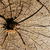 tree rings on a weathered tree trunk stock photo © manfredxy