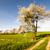 bloei · weide · bos · rand · kruiden - stockfoto © manfredxy