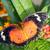 tropical · borboleta · natureza · verde · cor · branco - foto stock © manfredxy