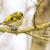 Homme · séance · brindille · arbre · nature · oiseau - photo stock © manfredxy