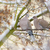 сидят · филиала · группа · внутренний · Blue · Sky · дерево - Сток-фото © manfredxy