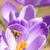arı · nektar · çiçek · mor - stok fotoğraf © manfredxy