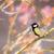 tit · vogel · tak · boom · natuur - stockfoto © manfredxy