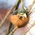 azul · teta · pássaro · sessão · galho · árvore - foto stock © manfredxy