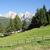 альпийский · луговой · лес · парка · Вайоминг · природы - Сток-фото © manfredxy