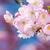 vliegen · bee · roze · voorjaar · schilderachtig - stockfoto © manfredxy