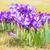 grupy · kwitnąć · łące · kwiaty · wiosną · charakter - zdjęcia stock © manfredxy