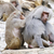 dois · comprometido · mútuo · família · natureza · animal - foto stock © manfredxy
