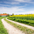 country road to a farm at a rape field stock photo © manfredxy