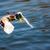 pato · retrato · água · cara · fundo - foto stock © manfredxy