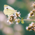 lagartas · repolho · borboleta · macro · natureza · planta - foto stock © manfredxy