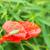 緑 · グラスホッパー · 座って · 花 · 草 · 庭園 - ストックフォト © manfredxy