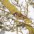 ağaç · serçe · kırmızı - stok fotoğraf © manfredxy