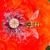 vermelho · papoula · inseto · natureza · fundo · verde - foto stock © manfredxy