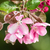 voorjaar · takje · roze · bloesems · klein · eieren - stockfoto © manfredxy