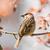 ツリー · スズメ · 座って · 小枝 · クローズアップ · 自然 - ストックフォト © manfredxy