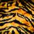cheetah · huid · mode · kat - stockfoto © marcogovel