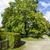 新鮮な · 緑 · 道路 · 青 · 曇った · 空 - ストックフォト © marekusz