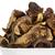 wild and dried mushrooms stock photo © marekusz