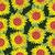 vettore · girasole · modello · di · fiore · sementi · testa · fiore - foto d'archivio © margolana