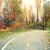 automne · route · coloré · feuillage · bois · arbre - photo stock © maridav