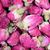 kurutulmuş · kırmızı · çay · bitki · Asya - stok fotoğraf © maridav