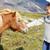 mujeres · caballos · dos · caucásico · sonriendo - foto stock © maridav
